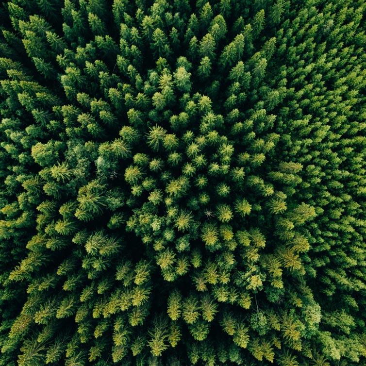 Mets ülaltvaates